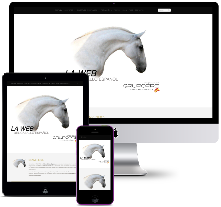 Website for Spanish Horse consulting company